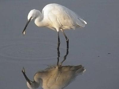 koshi-tappu-wildlife-and-bird watching